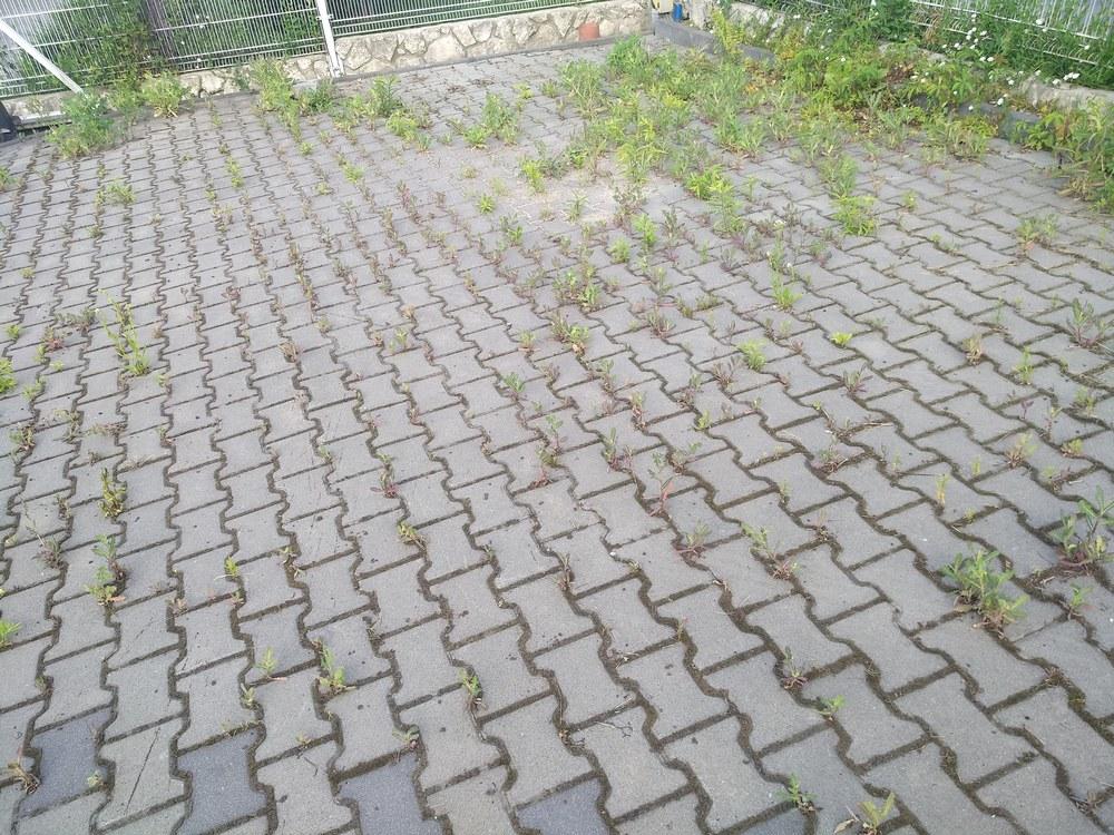czyszczenie kostki brukowej z roślin sytuacja przed czyszczeniem